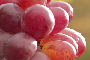 Água de uva